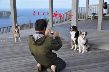 S1211dog10_2