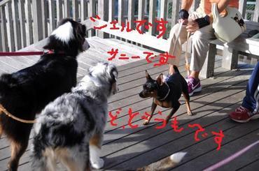 S1211dog20_2