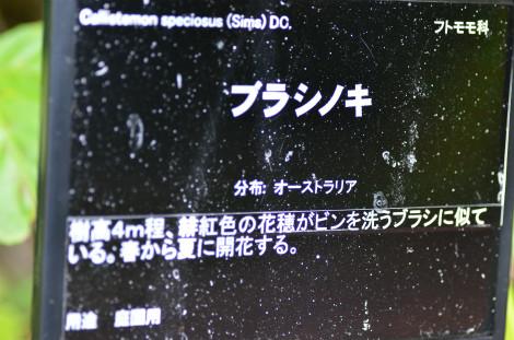S0419bura2