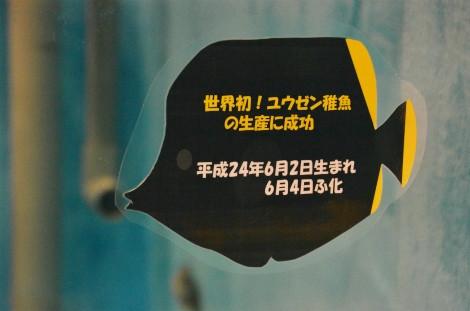 S0613yu