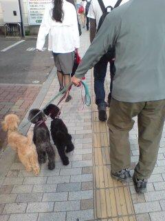 松山の犬たち