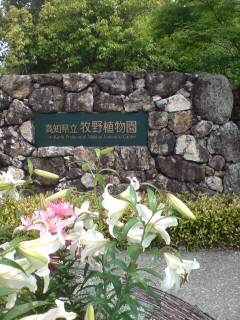 牧野植物園