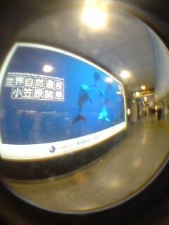 小笠原の看板