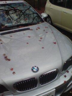BMWにモミジ