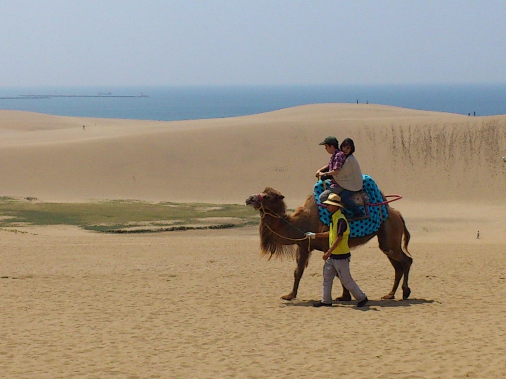 鳥取砂丘を見学