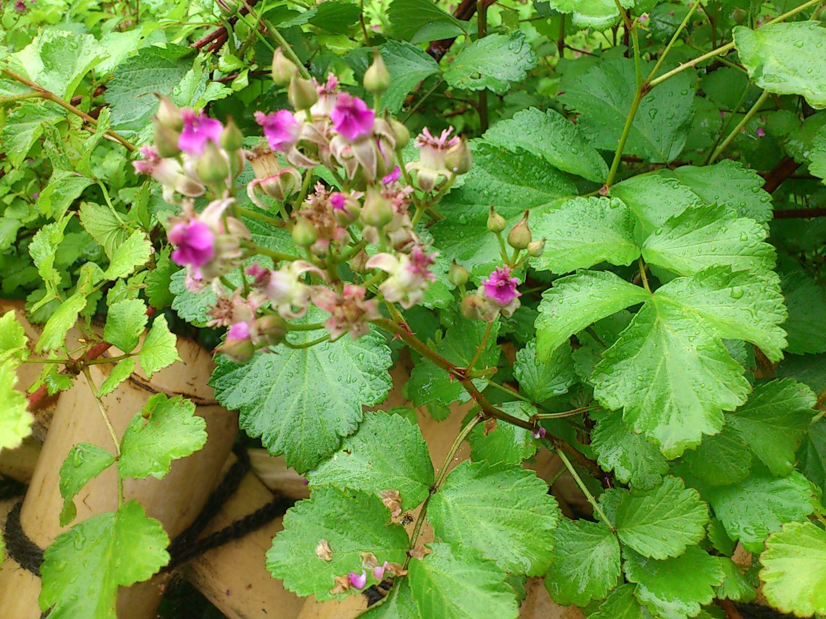 彦根城固有の植物